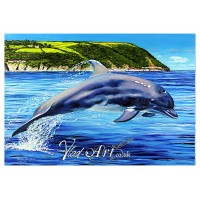 Dolphin leaping in Aberporth bay