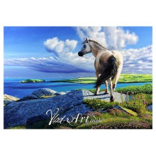 Wild pony on Cemaes Head