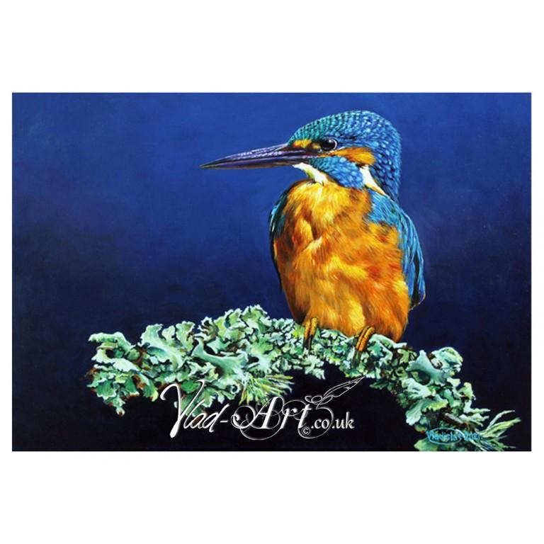 Kingfisher on a lichen sprig