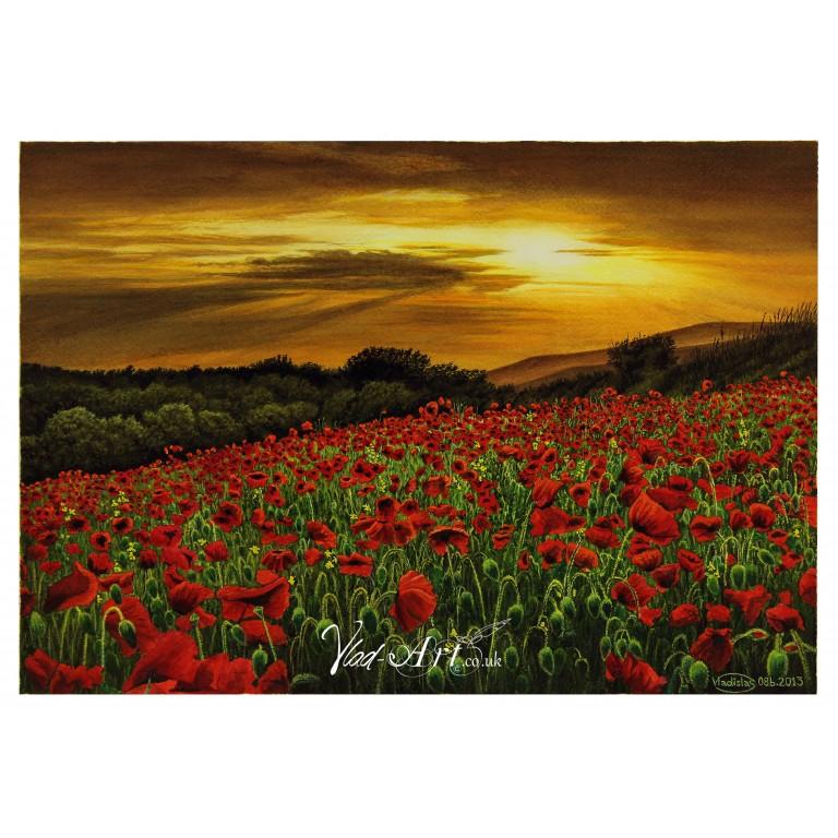 Wild Poppy Field in Sunset