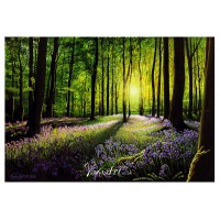 Sunset in Bluebell Wood