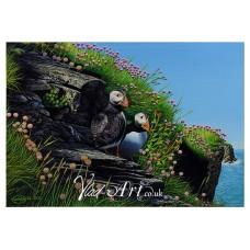 Puffins on Skomer Island, Wales