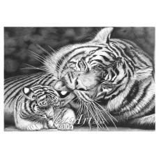 Tigress preening her cub