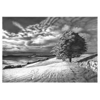 Lone tree in stormy sky