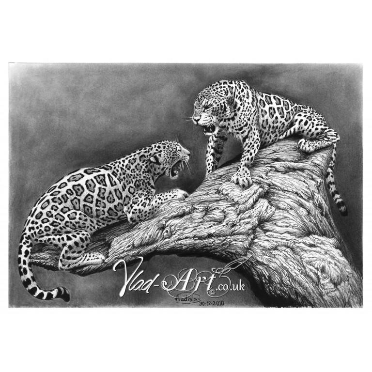 Growling Jaguars