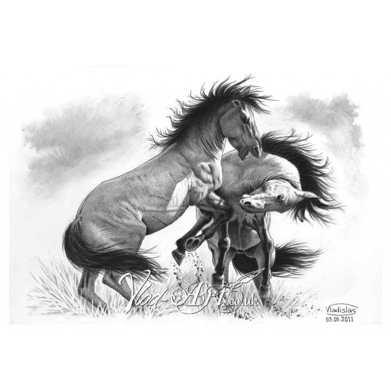 Fighting wild Stallions